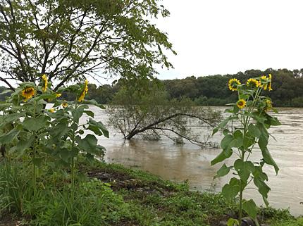 増水した北上川