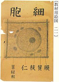 宮澤賢治「教材用絵図・細胞」