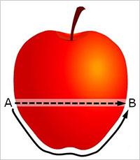 りんごとワームホール
