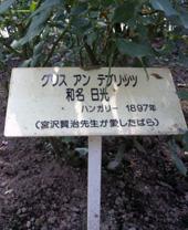 花巻温泉バラ園の名札
