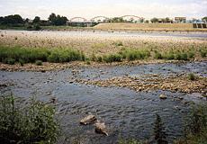 北上川の中洲
