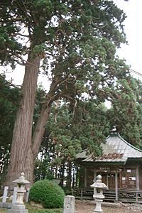 地蔵堂と巨杉