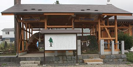 延命寺の巨杉の切り株